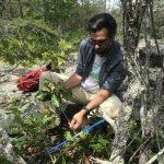 man coring a small tree